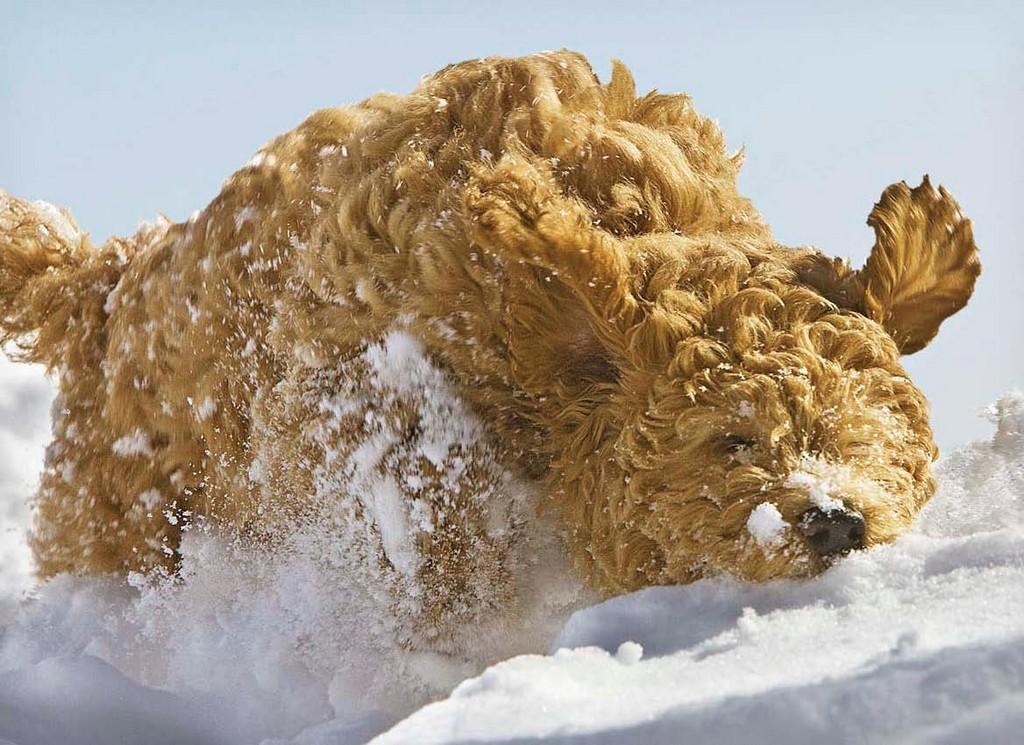 3rd Place - Dashing Through the Snow