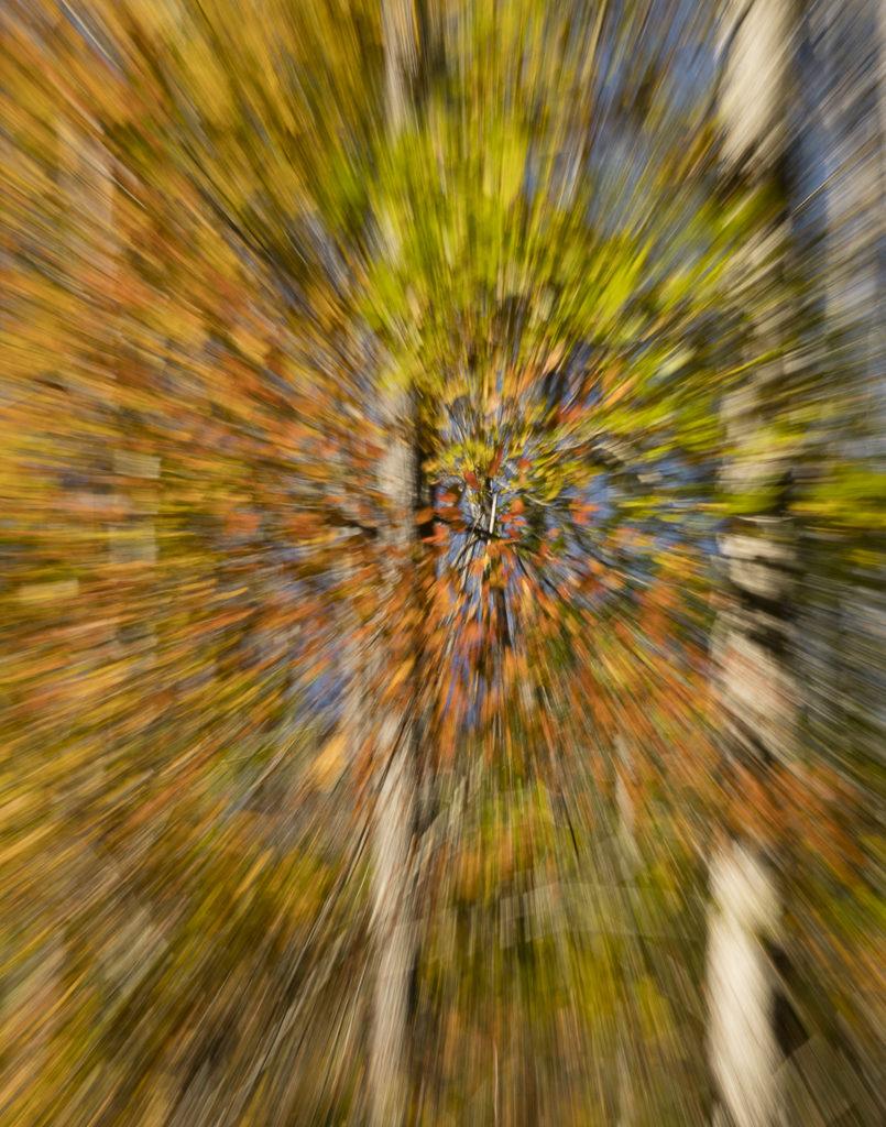 Zoom-3-805x1024.jpg