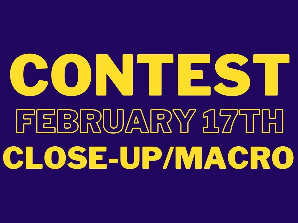 CONTEST-20210217-Close-Up-Macro.jpg