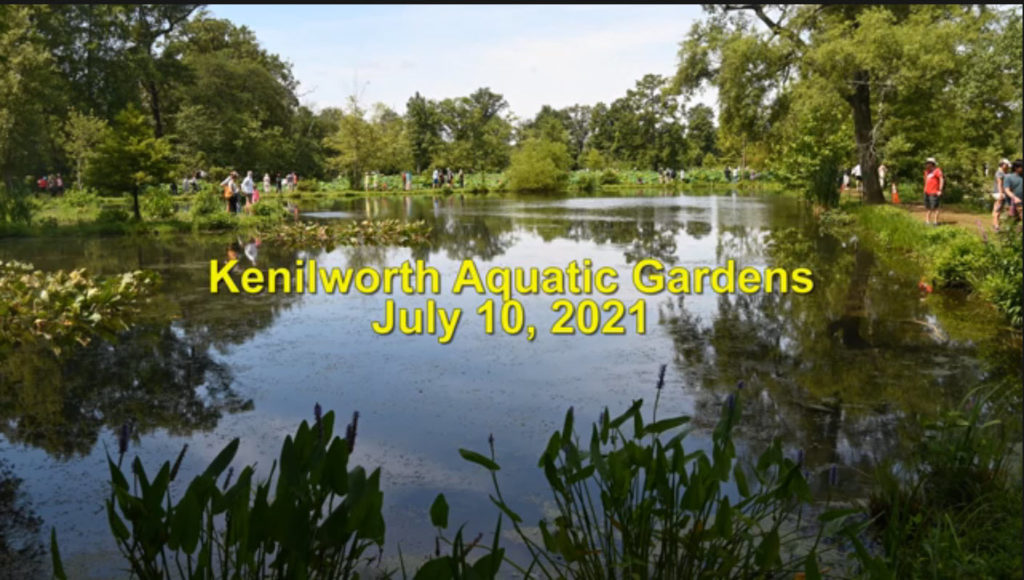 Kenilworth-Aquatic-Gardens-Video-Splash-Page-1024x580.jpg